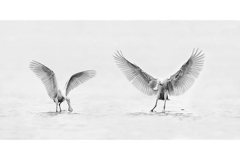 Wings Up B&W