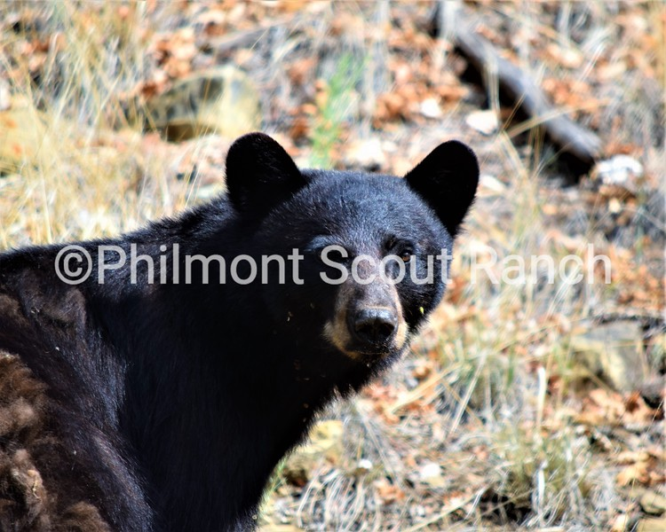 2nd_2018_Animals and Wildlife_ChambersEnglish_A First Encounter_Pueblano_444.JPG