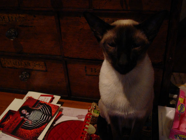 Ari sitting on cookbook...waiting for Valentine treats