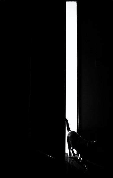 © Jorge Alves