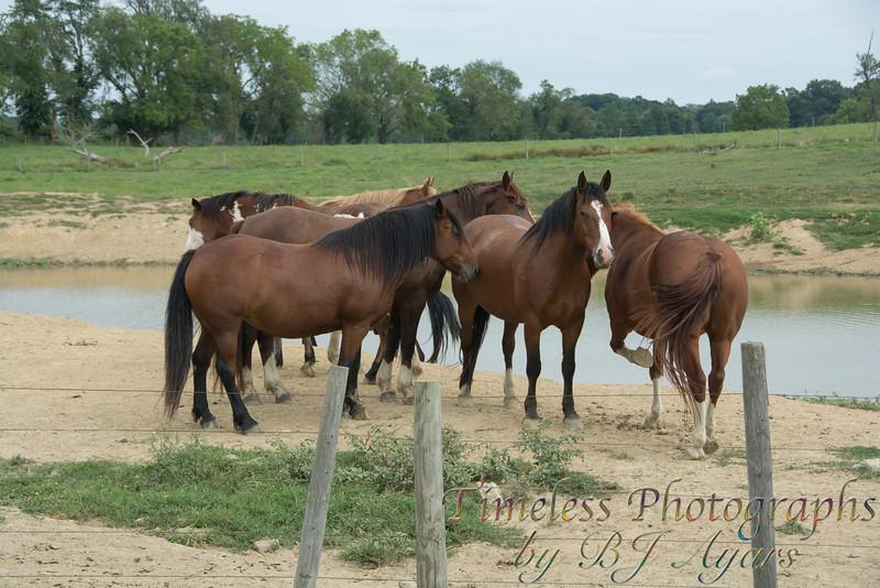 2014_Horses_Woodstown_21.jpg
