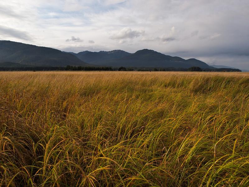 mendenhall_wetlands_juneau.jpg