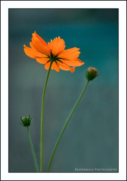 Rohrbaugh Photography Flowers 10.jpg