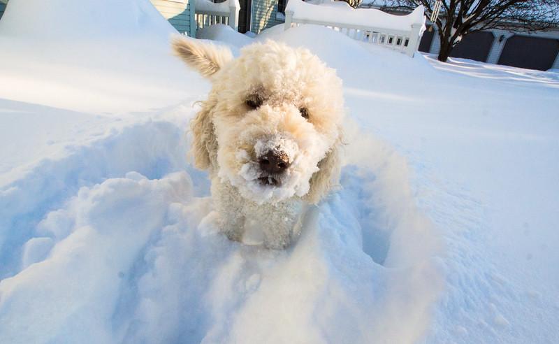 snowfall-05300.jpg