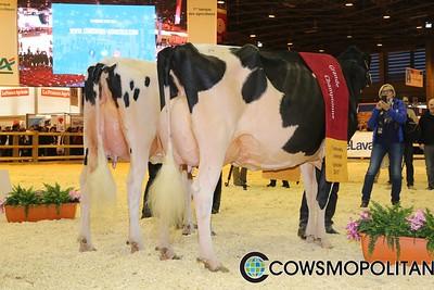 Grand Holstein