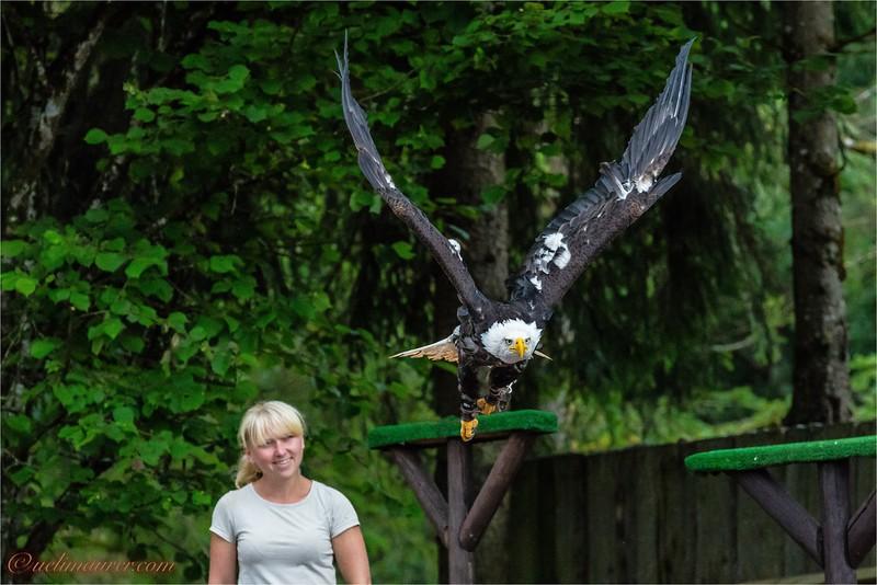 2016-06-29 Vogelpark Steinen -0U5A3285.jpg