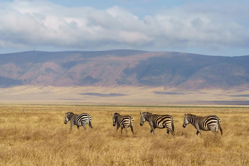 NgorongoroCrater-20181004-1382.jpg
