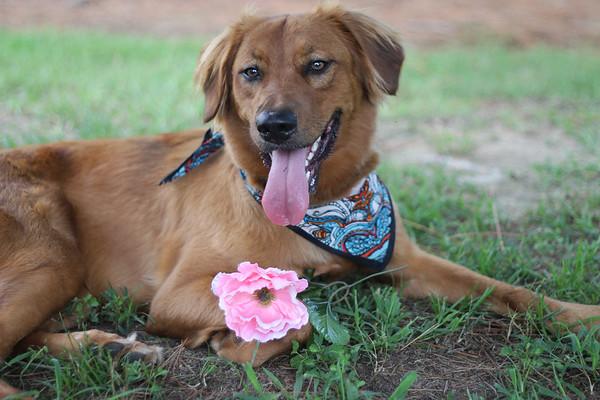 Hazel (Olivia's Dog)