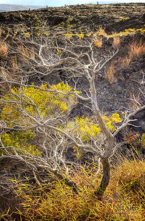 Volcanic landscape. © 2012 Sugar + Shake