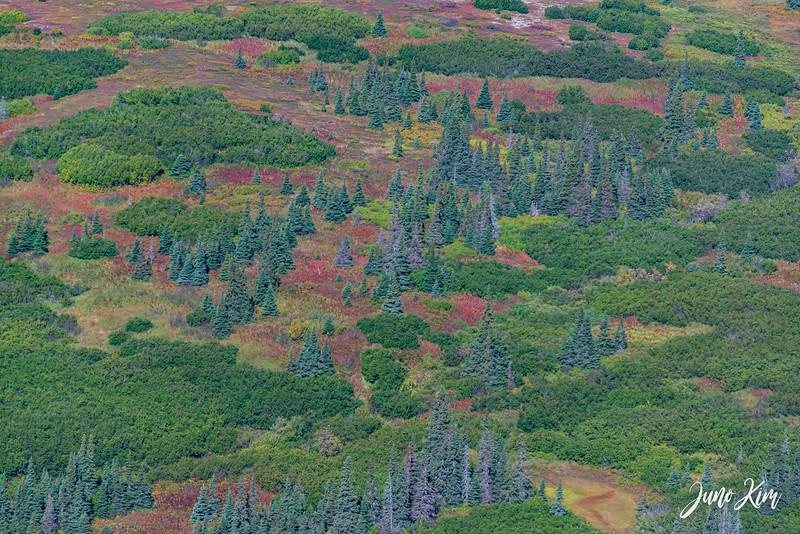 Rust's_Beluga Lake__6100969-2-Juno Kim.jpg