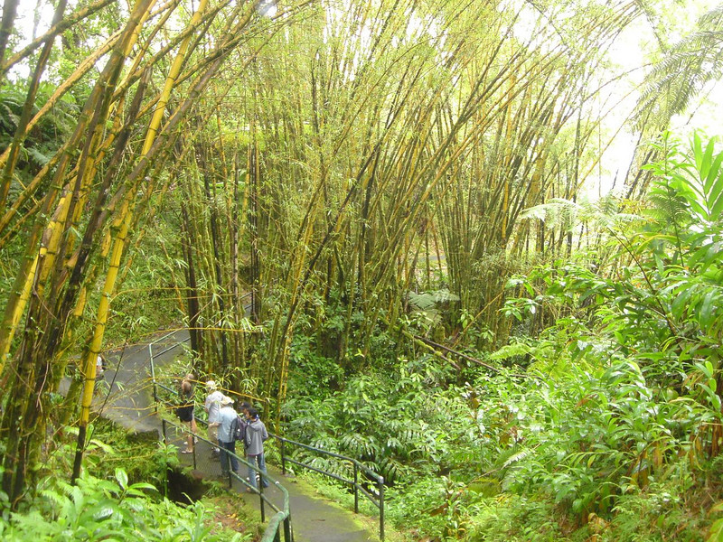 Hiking in rainforest of Hawaii