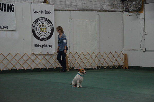 2016 October Rally & Obedience Trials