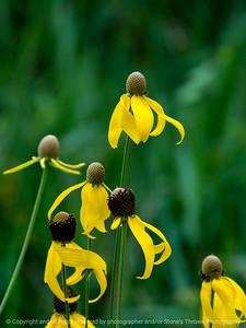015-flower-wdsm-20jul18-09x12-001-350-6082
