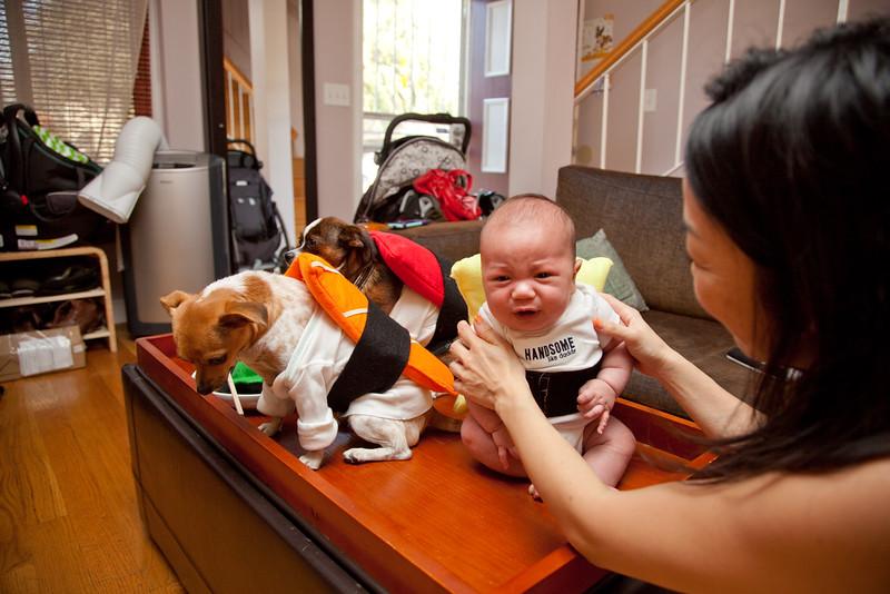 Dog-sushi-halloween-69.jpg