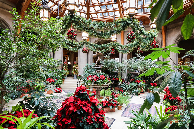 large room with christmas poinsettas and greenery