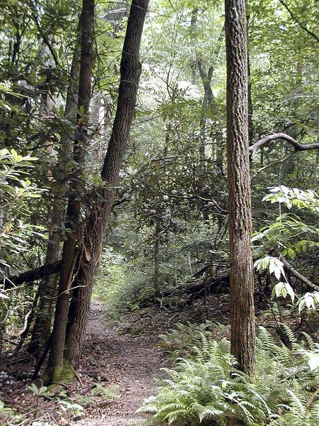 Honey Creek Loop Hike