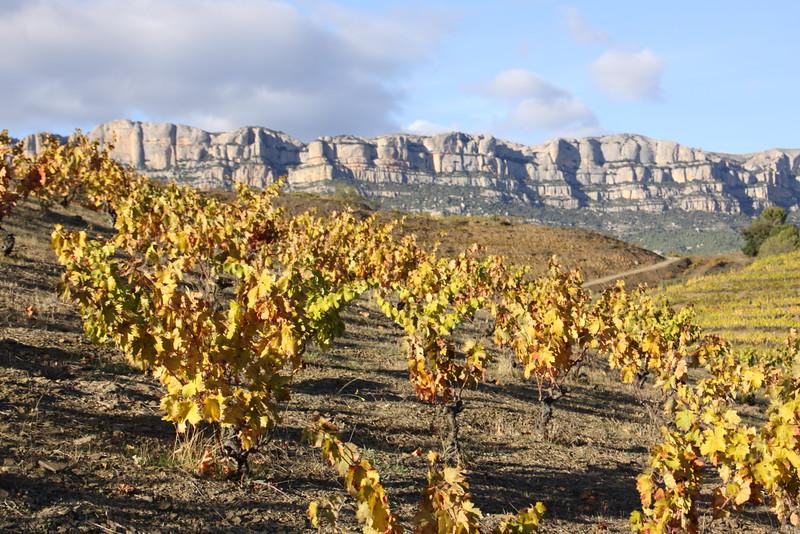 Vineyards of Mas Doix with Sara Doix