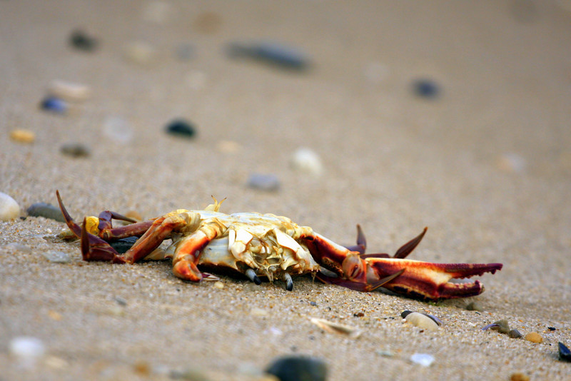 Tumbleweed Tuesday at Pikes Beach, Westhampton Beach, NY.