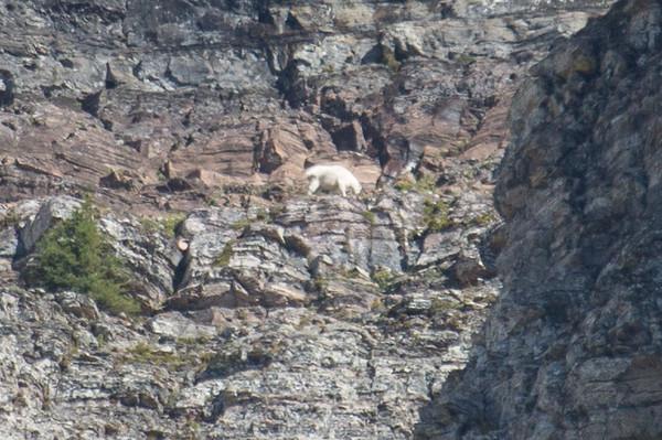 20160827-Glacier National Park-_28A3001.jpg