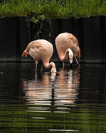 Washington Wetlands