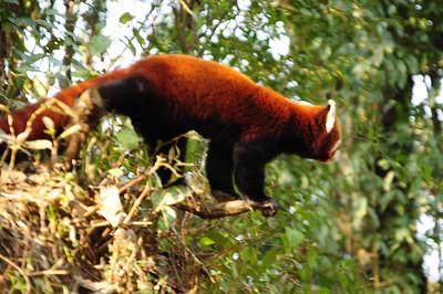 15 Darjeeling zoo