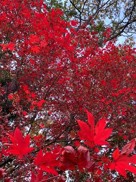 Fall Color 2018 - 6.jpg