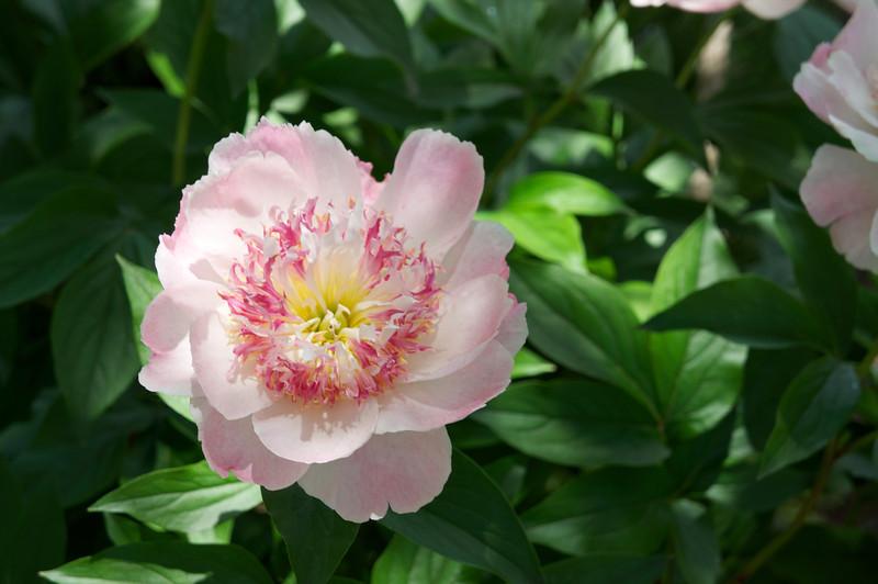 2013-06-15_Botanical~011.jpeg