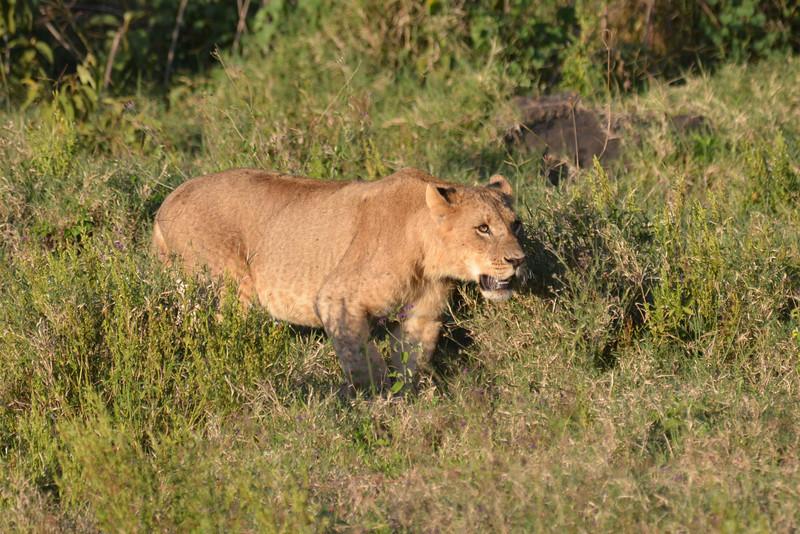 East Africa Safari 129.jpg