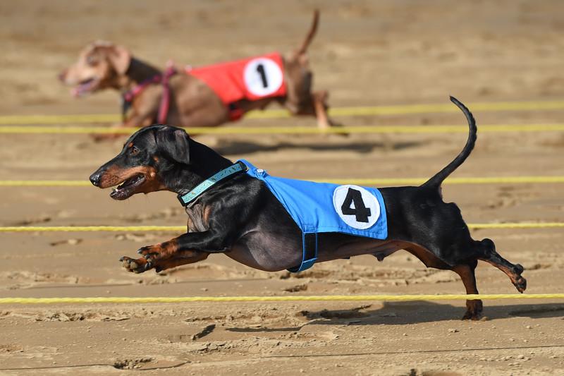 Belterra Park - Weiner Dog Races