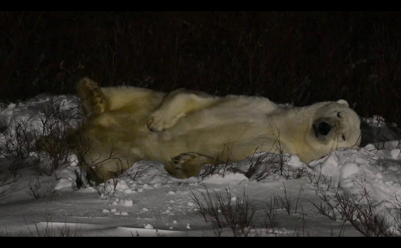 Sleeping_bear_005.mov