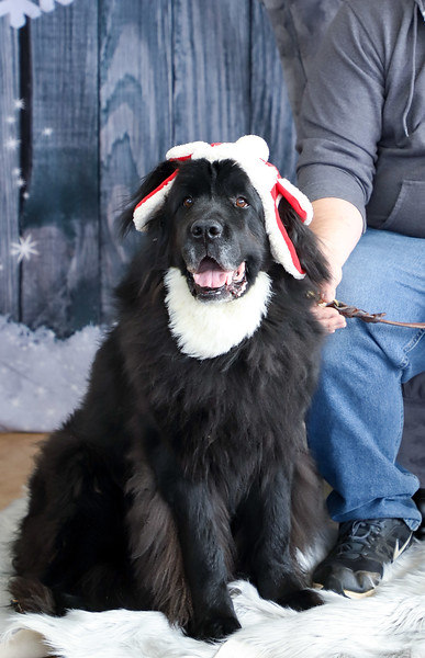 Pet Pics with Santa