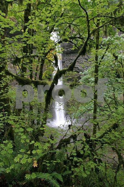 Silver Falls 4386.jpg
