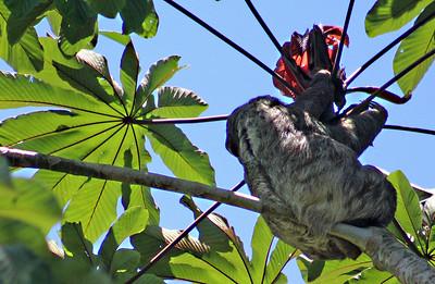 BIRDS (6) & Animals at Banana Azul
