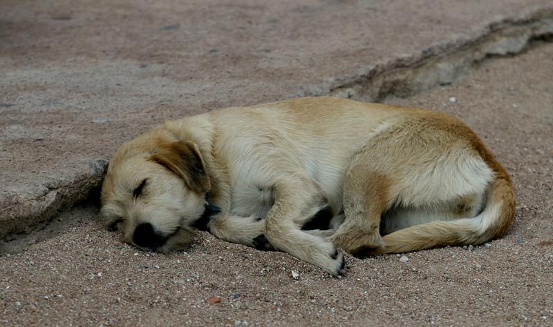 La sieste...moment sacré en Corse.!!!