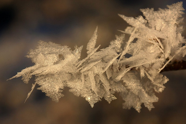 Macros d'hiver