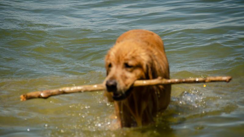 PuppyParty18-263.jpg