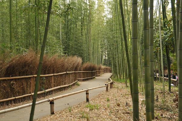 Arashiyama Bamboo Grove & Okochi Sanso Gardens