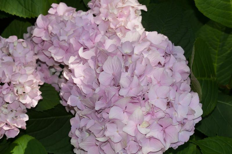 2009 06 30_NY Botanical Gardens_0684.jpg