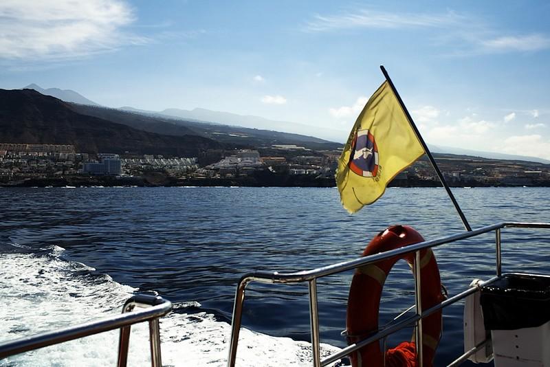 Vlajka, stvrzující, že jsme na palubě lodi, jejíž posádka má oficiální povolení a potřebné znalosti pro bezpečné a správné sledování mořských živočichů