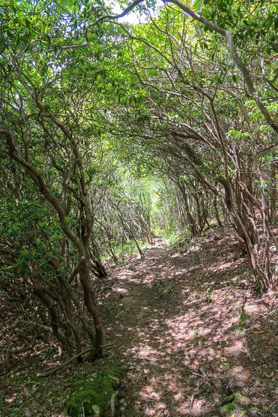 Mountains-to-Sea Trail -- 4,850'