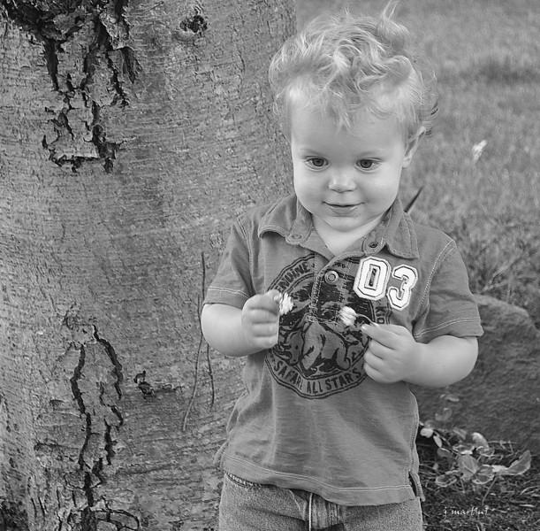 clover picker 7-11-2012.jpg