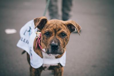 SCPA Puppy Walk - Queens Wharf