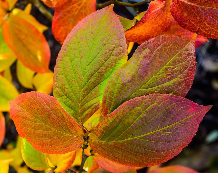 Oct_Leaves-25.jpg