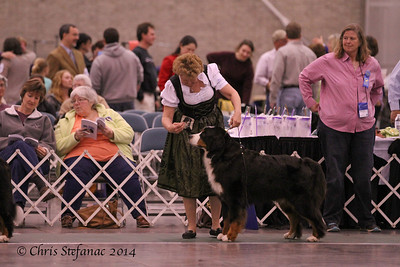 Veteran Sweeps 9-11 yrs Dogs BMDCA 2014
