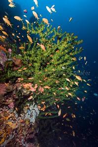 South Leyte 2012