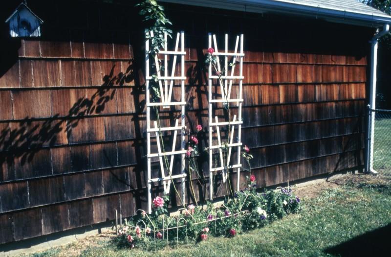 HCA-GII-003-Roses Sept 17,1990.jpg