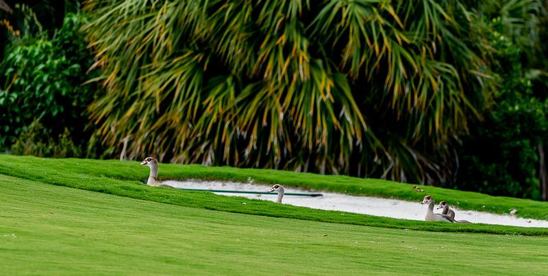 2019 PBS Golf Fundraiser -Ken (189 of 247).jpg