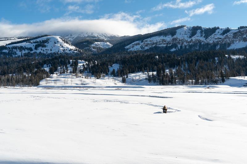 _AR70919 Bison at Soda Butte vista.jpg