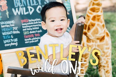Bentley's Wild One 11/12/17