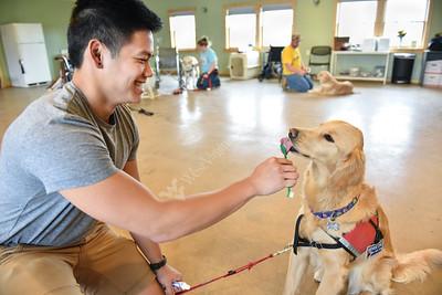 31867 Service Dog Training Lab